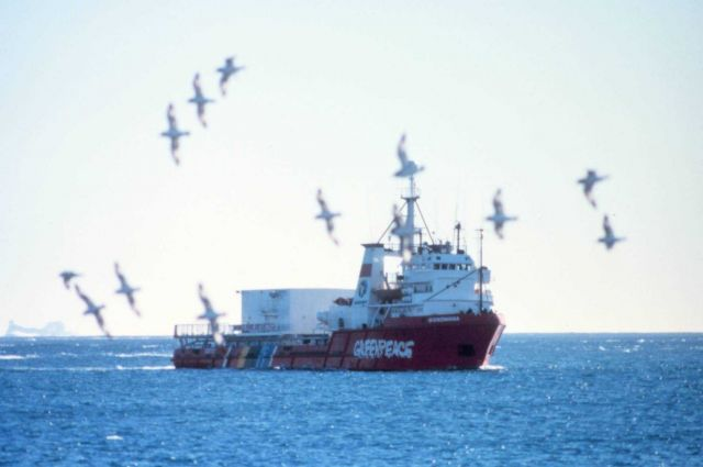 A flock of albatross flying in the vicinity of a Greenpeace vessel. Picture