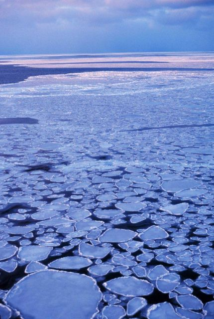 Pancake ice adrift on the Ross Sea. Picture