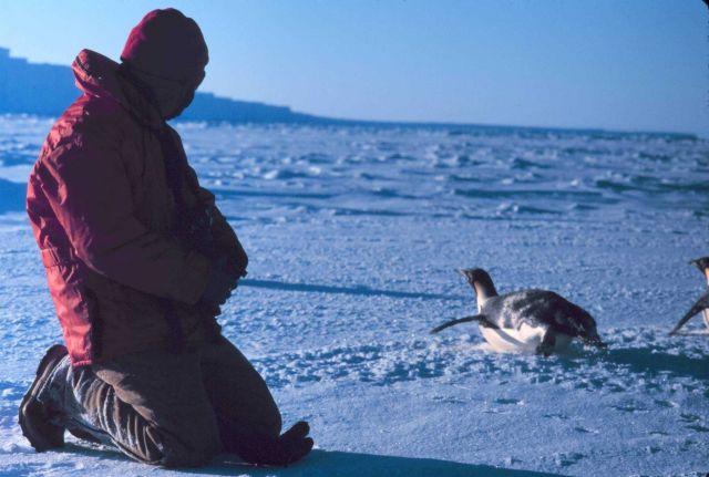 Emperor penguin and scientist. Picture