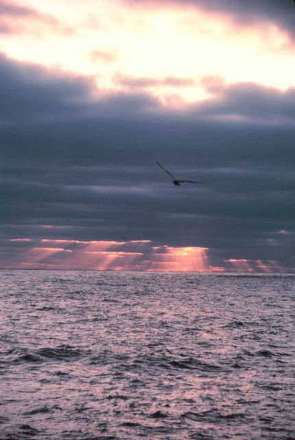 Sunset, seagull and crepuscular rays over the ocean. Picture