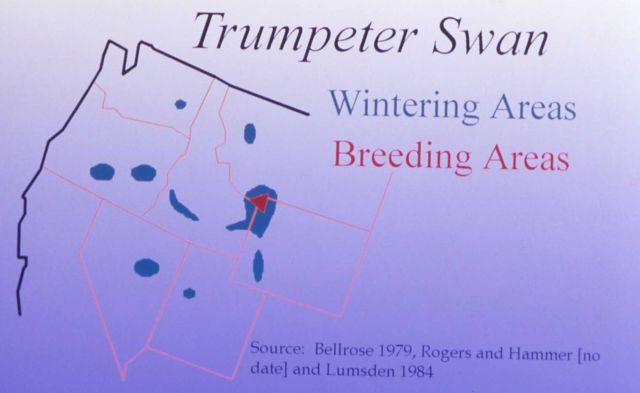 Trumpeter swan wintering/breeding areas map Picture