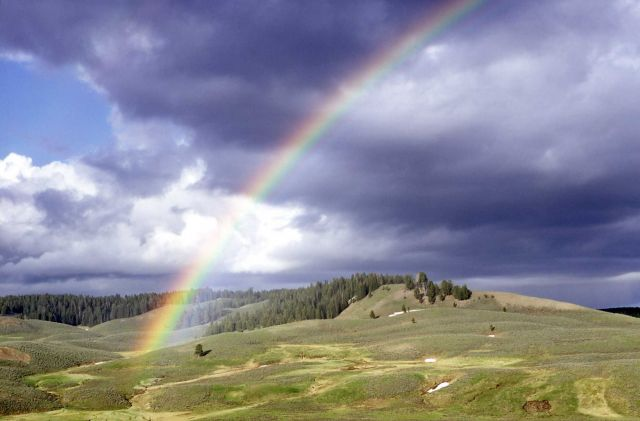 Rainbow in Hayden Valley Picture
