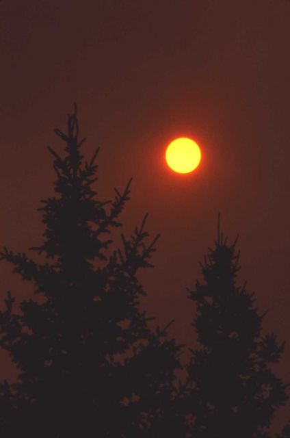 Silhouetted trees in smoke sunset Picture