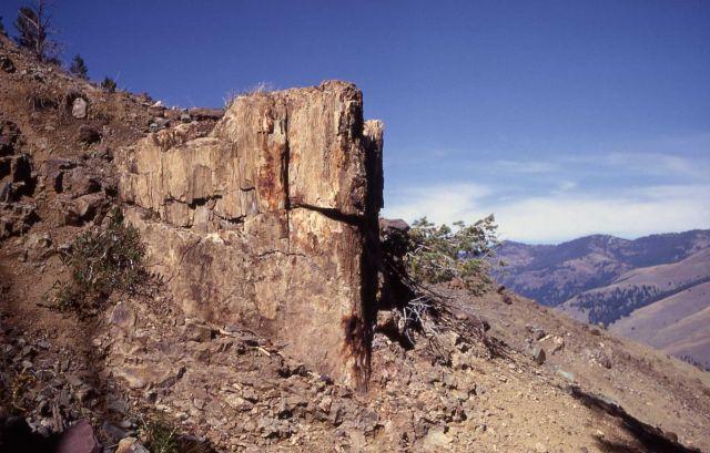 Good sized petrified stump on rocky hillside, Specimen Ridge Picture