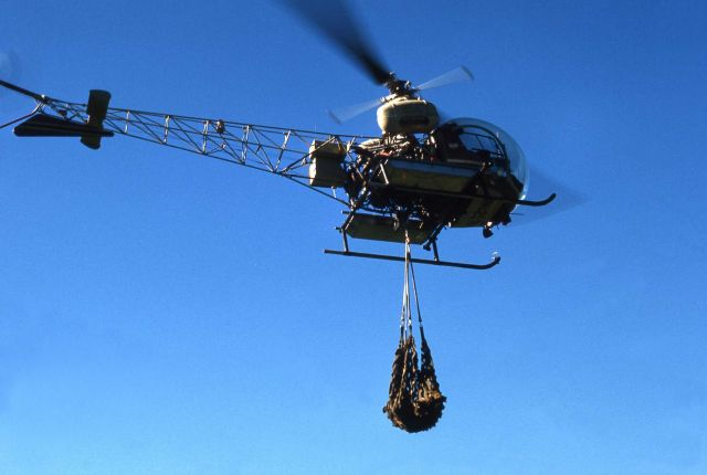 Moving grizzly bear with helicopter Picture