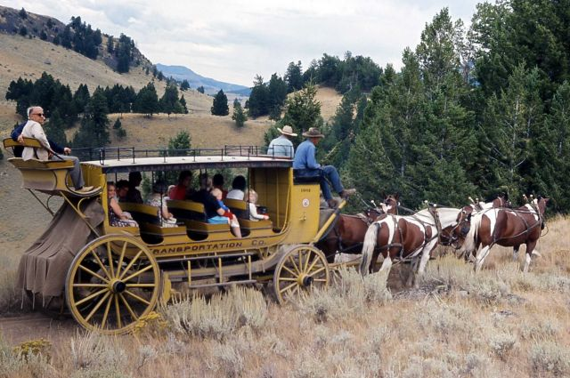 Stagecoach from Roosevelt Lodge loaded with passengers Picture