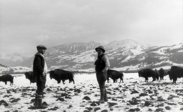 Lamar Bison Ranch Picture