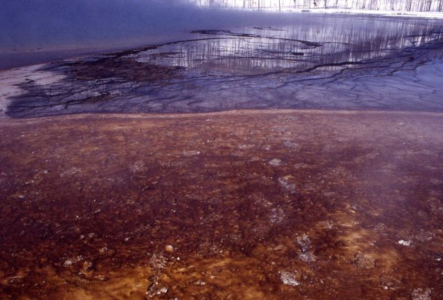 Bison hoof prints in phormidiun laminosun - Grand Prismatic Spring Picture