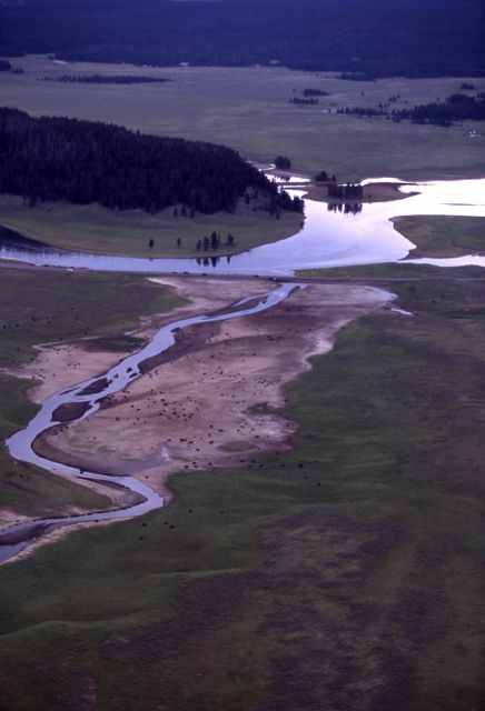 Aerial view of Yellowstone River with bison at Alum Creek Picture