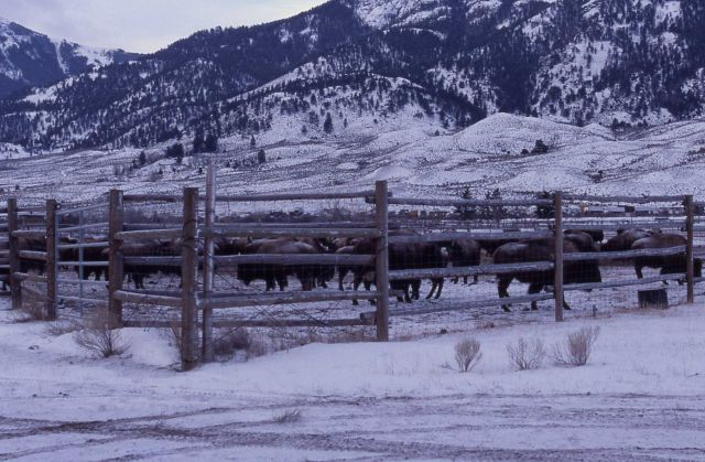 Stephens Creek bison pen Picture
