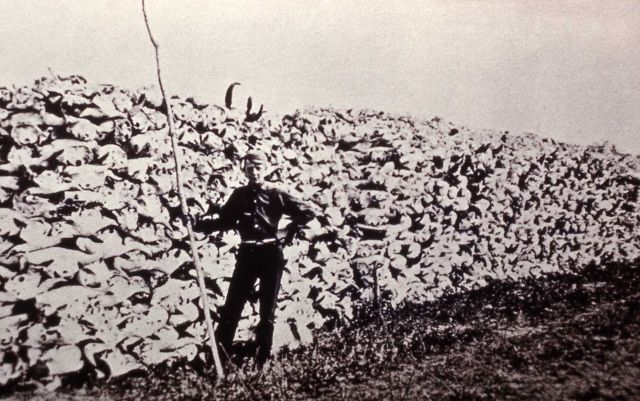 Copy of photo of hugh stack of bison skulls to be used for fertilizer Picture