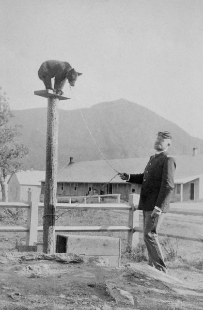 Captain George Anderson with a chained black bear on a platform on top of a pole at Mammoth Hot Springs Picture