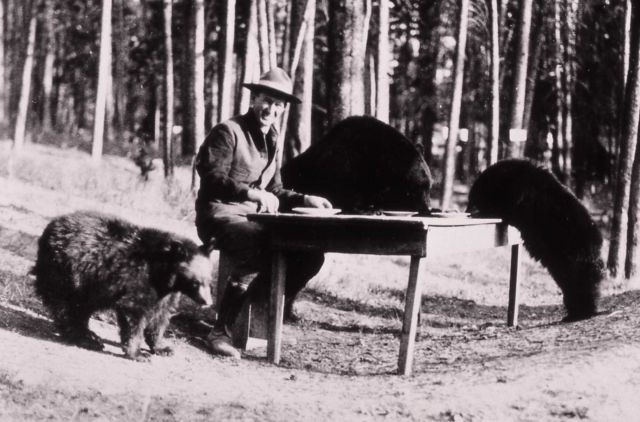 Superintendent Horace Albright sitting at a table with black bears Picture