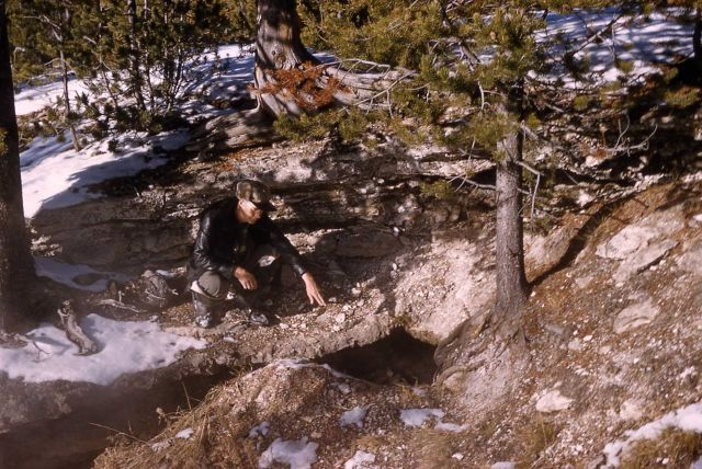Black bear den in the Old Faithful area Picture