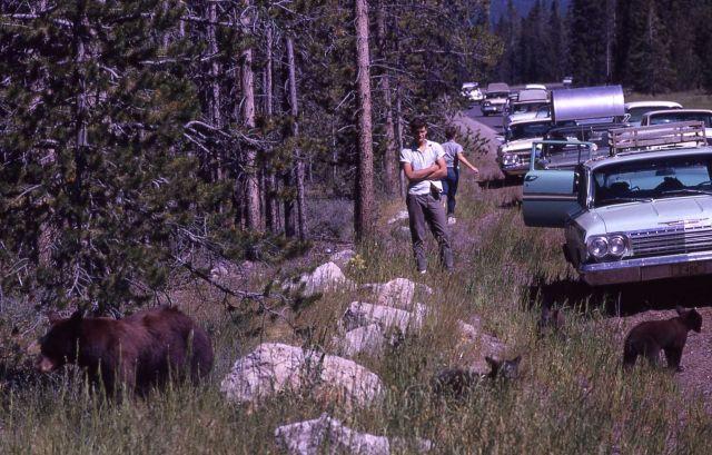 Roadside black bears Picture