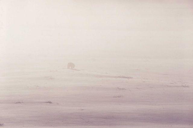 Coyote near Soda Butte in winter Picture