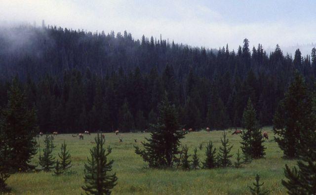 Elk in Willow Park Picture