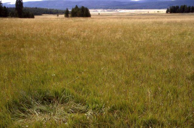 Elk bed Picture