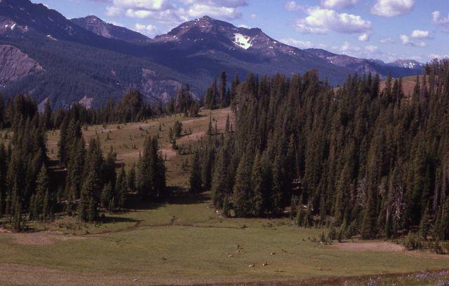 Elk near Parker Park Picture