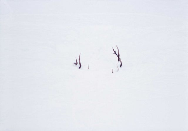 Bull elk's antlers sticking above Lamar River - bull fell through ice avoce Lamar Canyon Picture