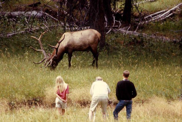 Visitors & elk Picture
