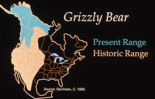 Grizzly bear range map - present/historic Picture