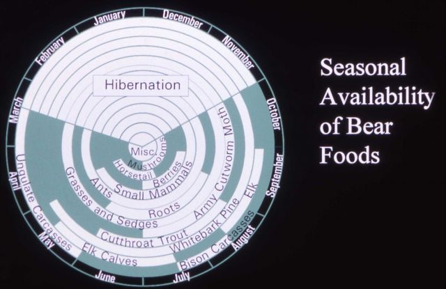 Graph showing seasonal availability of bear foods (grizzly) Picture