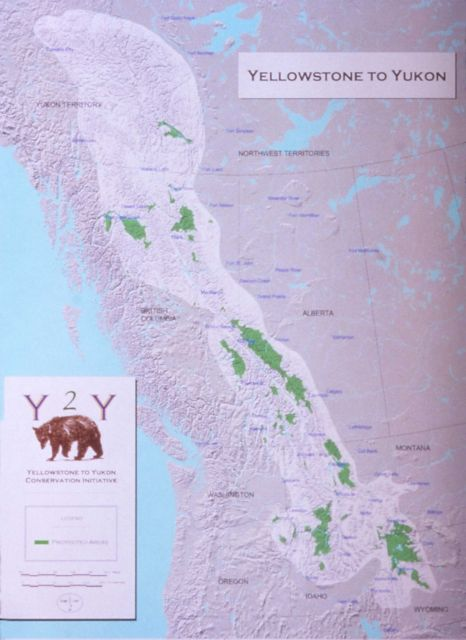 Yellowstone to Yukon conservation initiative map - Grizzly bear Picture
