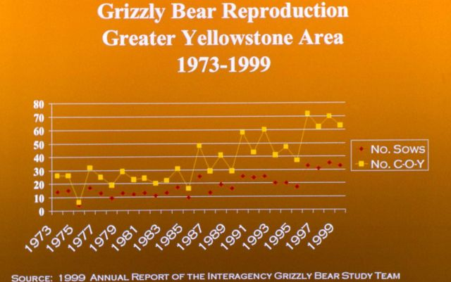Grizzly bear reproduction in the Greater Yellowstone area chart, 1973-1999 Picture