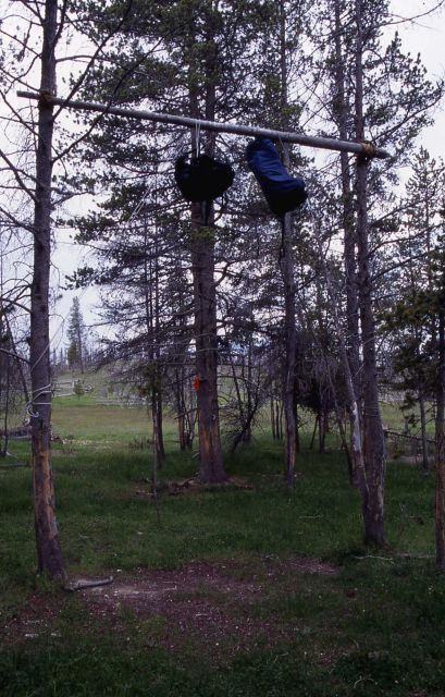 Two backpacks hanging on bear poles in a backcountry campsite in Sentinel meadows - Grizzly bear Picture