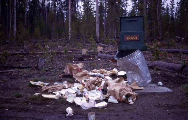 Grizzly bear damage to