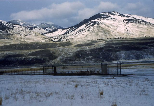 Pronghorn antelope trap at Reese Creek Picture