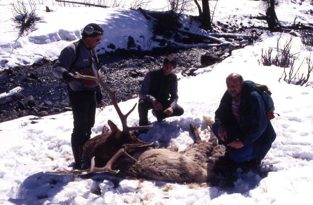Mike Phillips, Doug Smith & Dave Mech with elk killed by wolves in Lamar Valley Picture