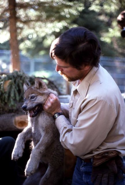 Mark Johnson holding wolf pup Picture