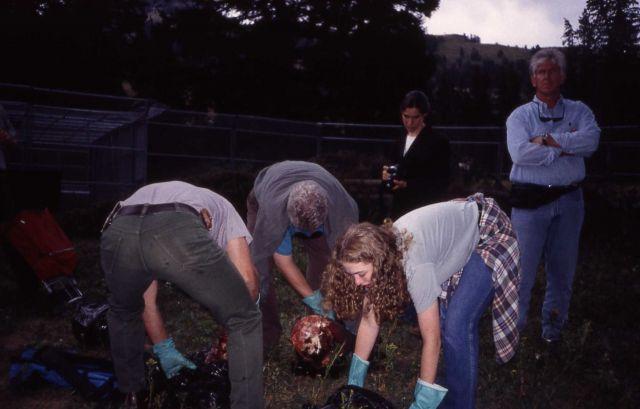 Mike Phillips, President Bill Clinton, Chelsea Clinton, Chelsea's friend Rebecca Kolsky & secret service agent in the Rose Creek wolf pen Picture