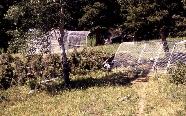 Rose Creek wolf pen damage Picture