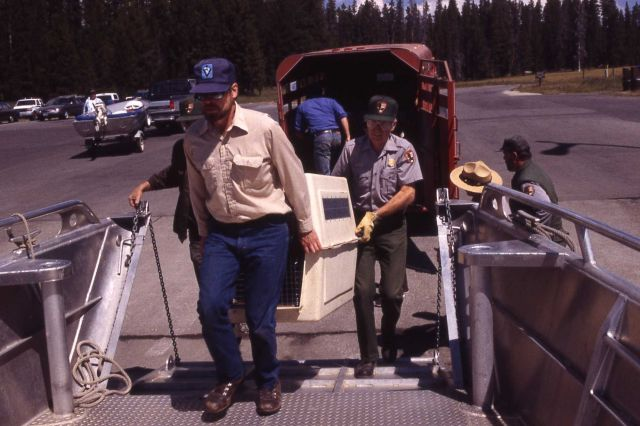 Loading boat at marina with Trail Creek wolves Picture