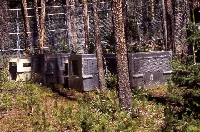 Crates with Trail Creek wolves Picture