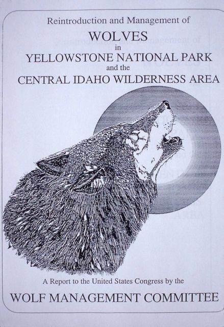 Reintroduction of wolves in Yellowstone National Park & Central Idaho Picture