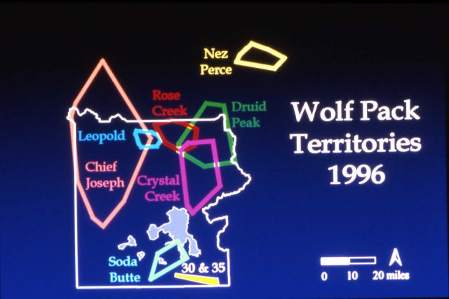 Wolf pack territory - map Picture