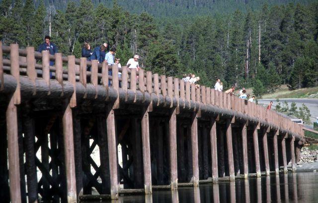 Fishing Bridge Picture