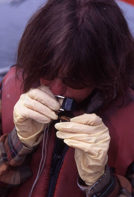 Researcher examining small piece of spire Picture