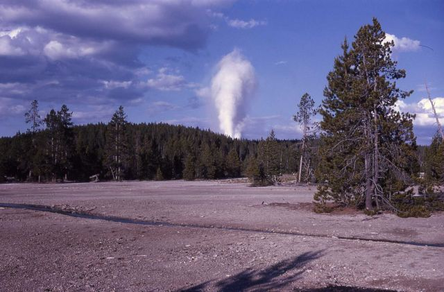 Distant view of Steamboat Geyser - Norris Geyser Basin Picture