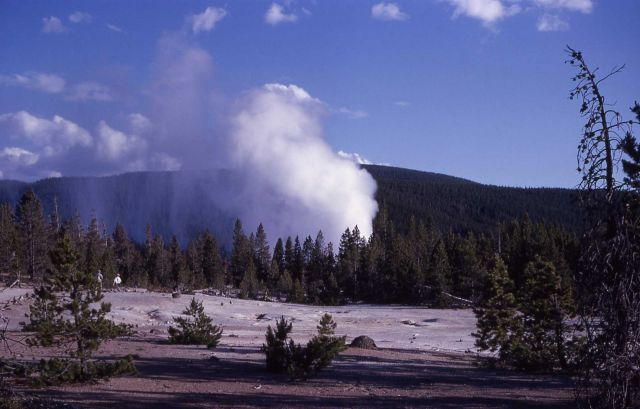 Steamboat Geyser as seen from Norris Museum - Norris Geyser Basin Picture