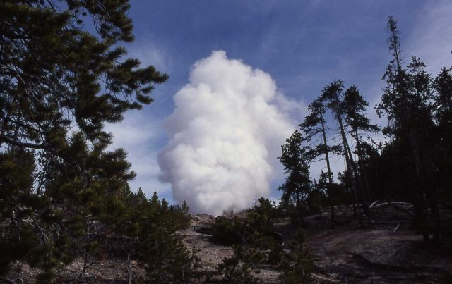 Steamboat Geyser in steam phase at 10:00 AM on May 2, 2000 (5:00 AM eruption) - Norris Geyser Basin Picture