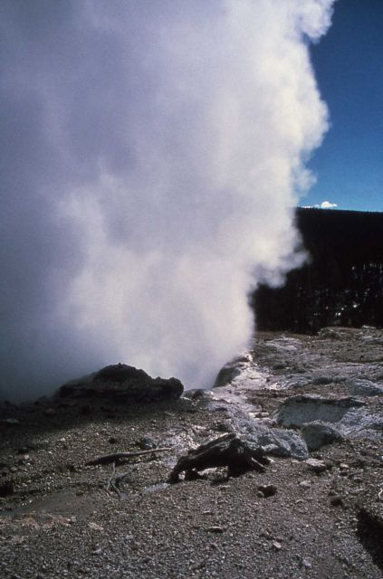 Close up of Steamboat Geyser in steam phase - Norris Geyser Basin Picture