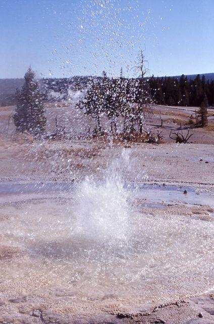 Sawmill Geyser - Upper Geyser Basin Picture