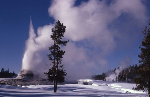 Castle Geyser in winter - Upper Geyser Basin Picture
