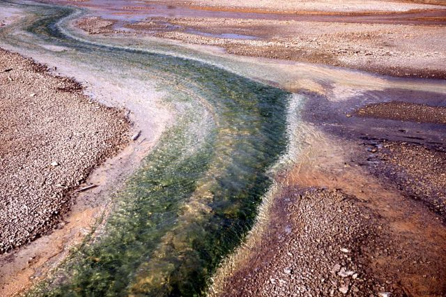Algae in runoff channels Picture