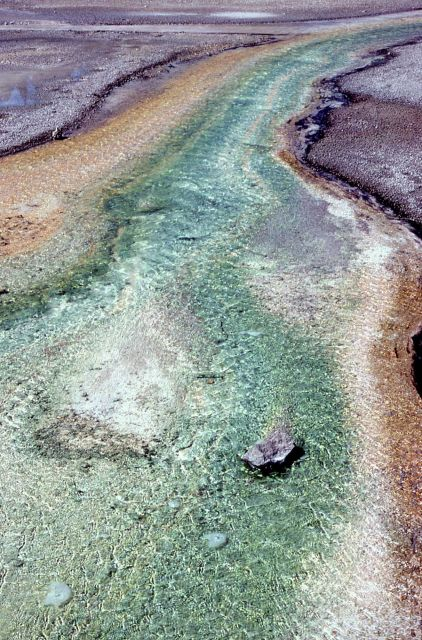 Algae in run off channel at Norris Geyser Basin Picture